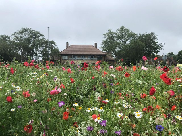 A wildflower roundabout in Studfall Avenue. Copyright: Northants Telegraph.
