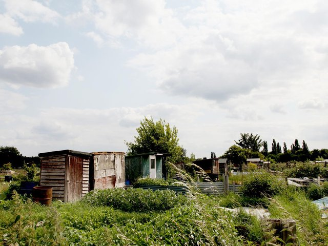 The council will take over responsibility for allotments. (Margaret Road allotments pictured).