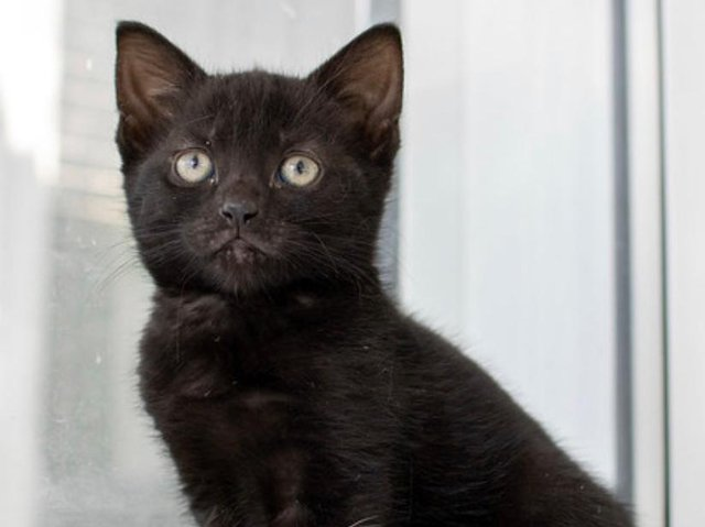 Animals In Need is appealing for help in re-homing these 'special' cats