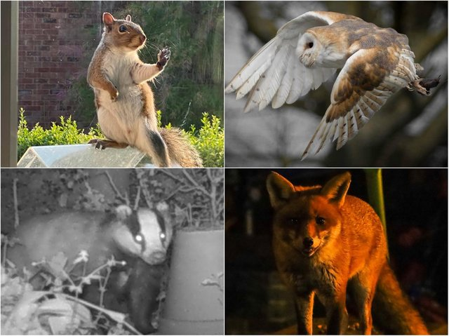 Our readers sent in pictures of wildlife spotted across Northamptonshire.