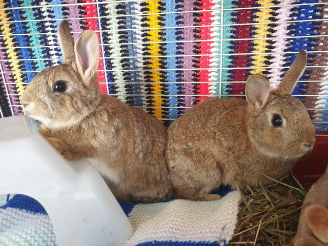 Animals In Need will soon be able to start re-homing rabbits like these which were dumped at a vets in Northampton