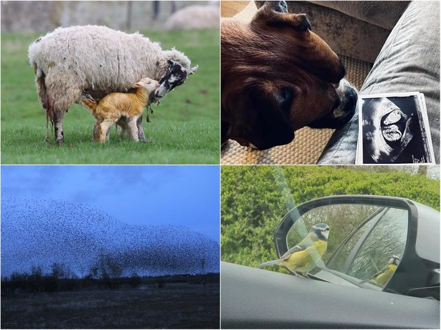 Readers shared their favourite pictures they took in Northamptonshire this week.