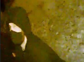 Police issued this CCTV image of a man they want to speak to following an attempted burglary in Duston