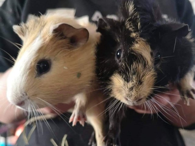 Arthur and Merlin are looking to be re-homed