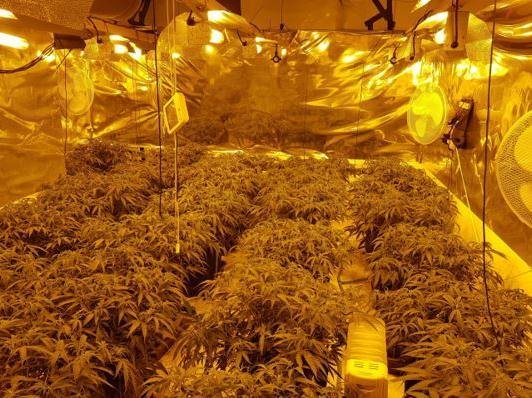 Inside the cannabis factory in Stanwick