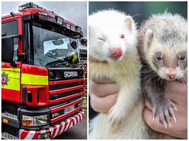 Daventry firefighters rushed to rescue a ferret stuck in a cage